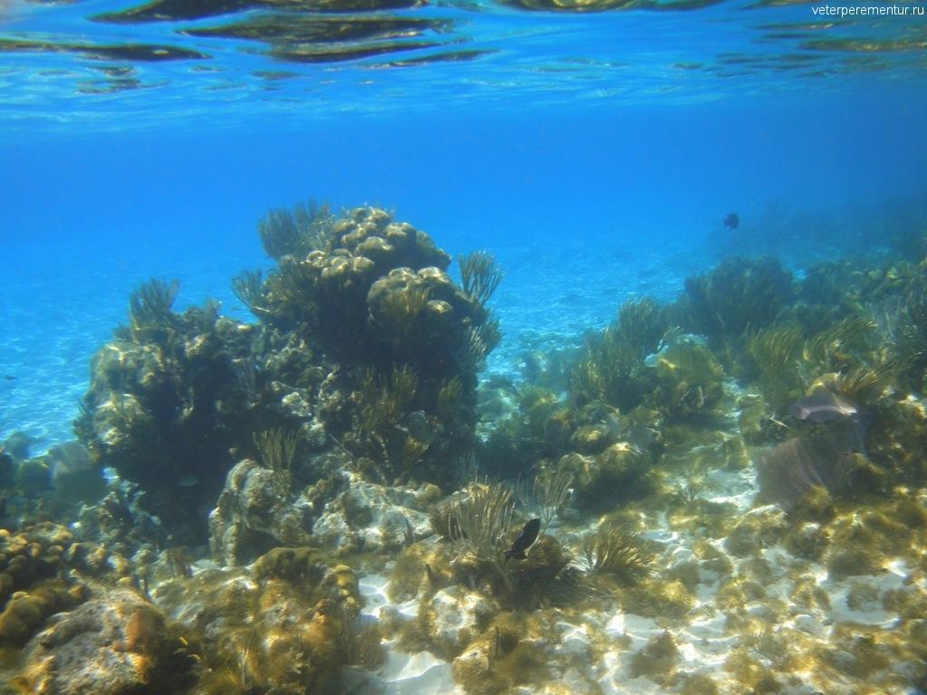 Гранд Кайман, коралловые сады