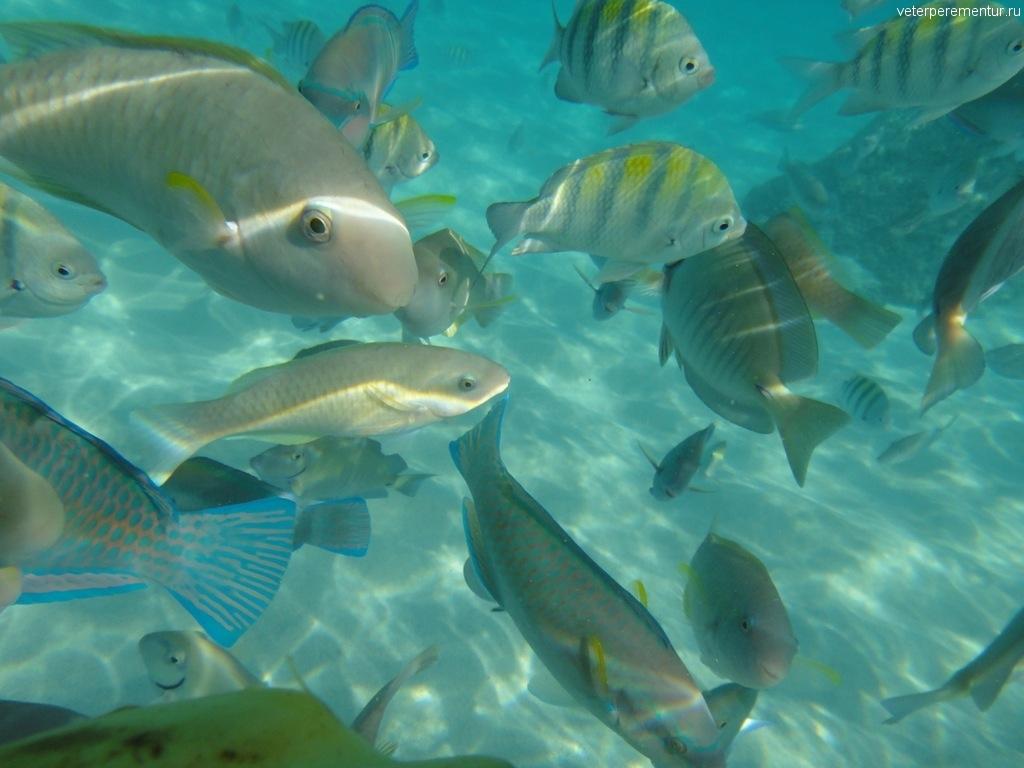 Подводный мир Коки бич
