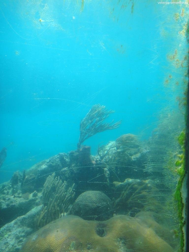 Подводная обсерватория, Coral World