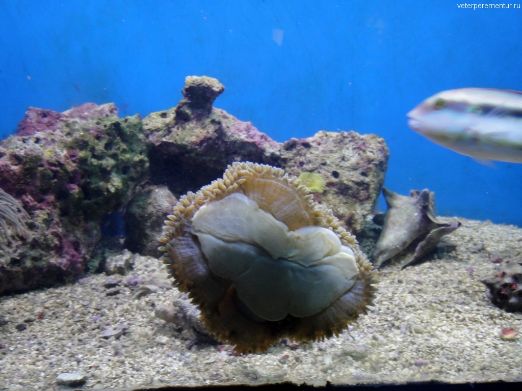 Coral World на Ст. Томасе