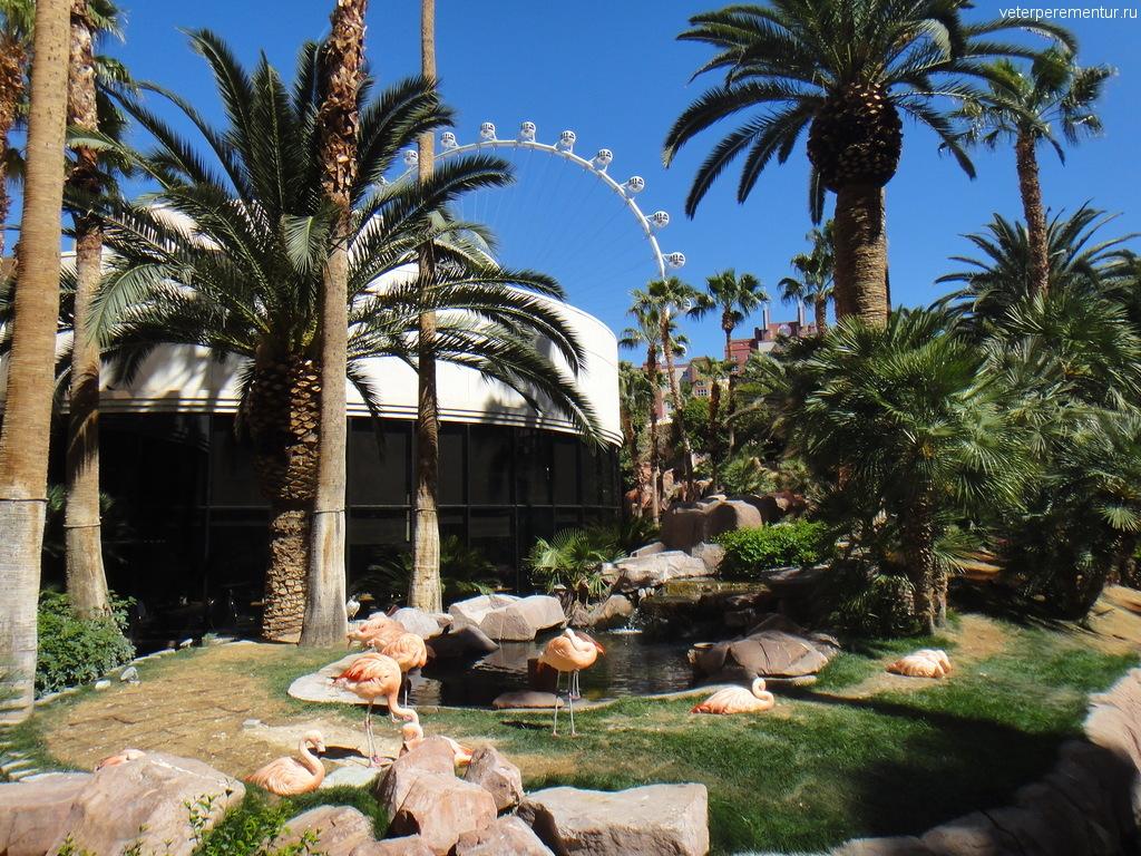 Территория отеля Фламинго, Лас Вегас