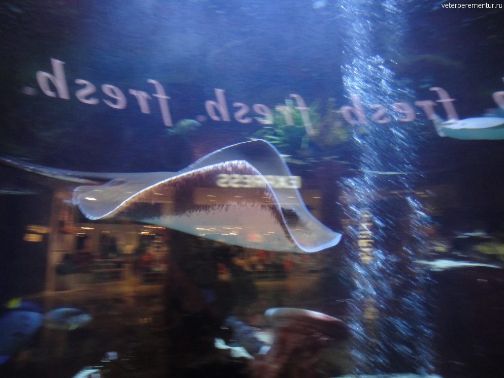 Аквариум в Цезарь Палас, Лас Вегас