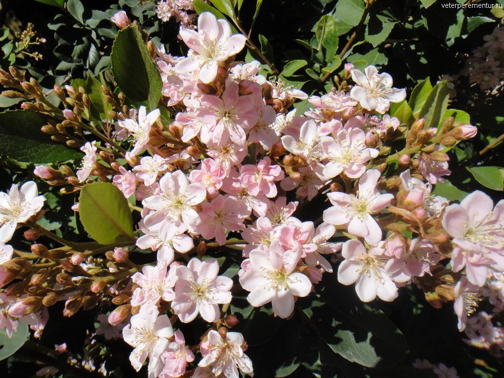 Цветы в Лас Вегасе