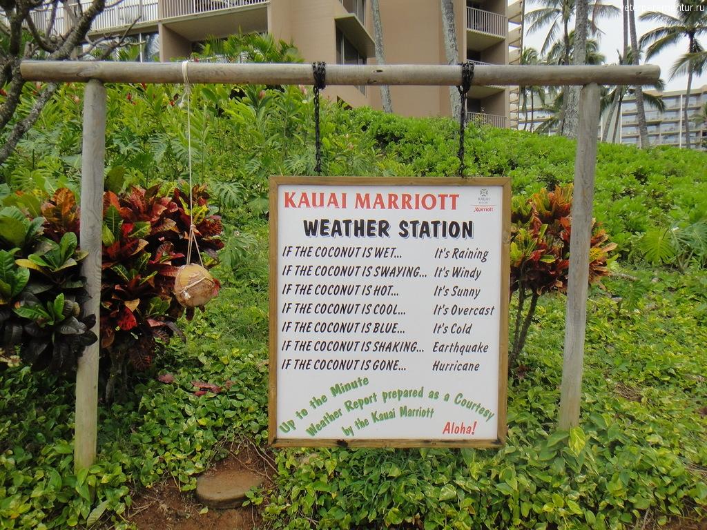 Предсказание погоды с помощью кокосового ореха, Гавайи