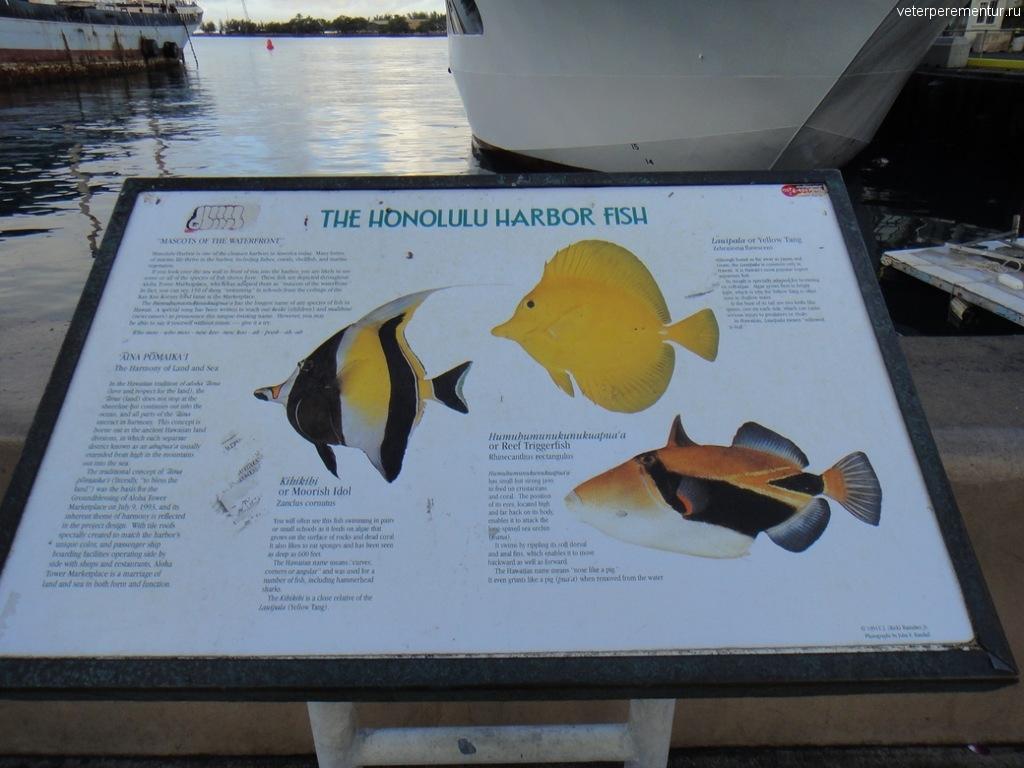 Табличка с рыбами, которых можно увидеть на Гавайях