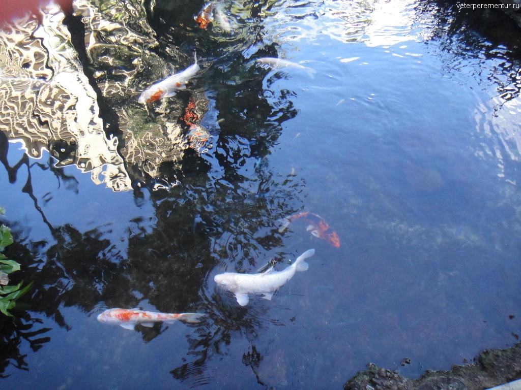 Рыбы в Гонолулу, Гавайи