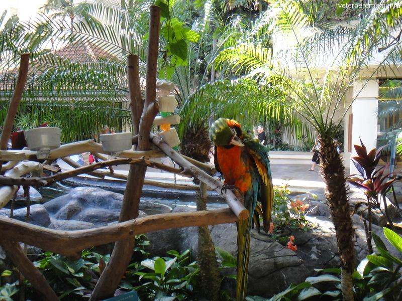 Попугай, Гонолулу, Гавайи