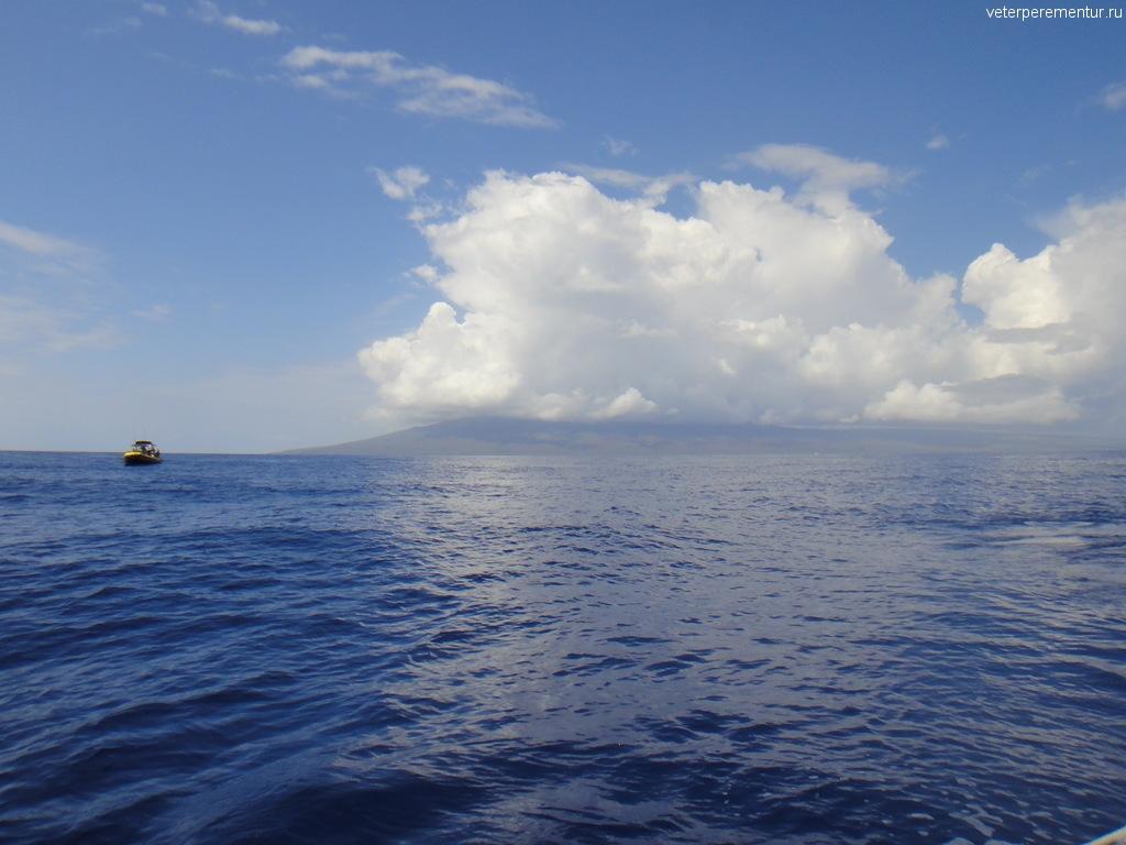 Экскурсия по наблюдению за китами, Мауи
