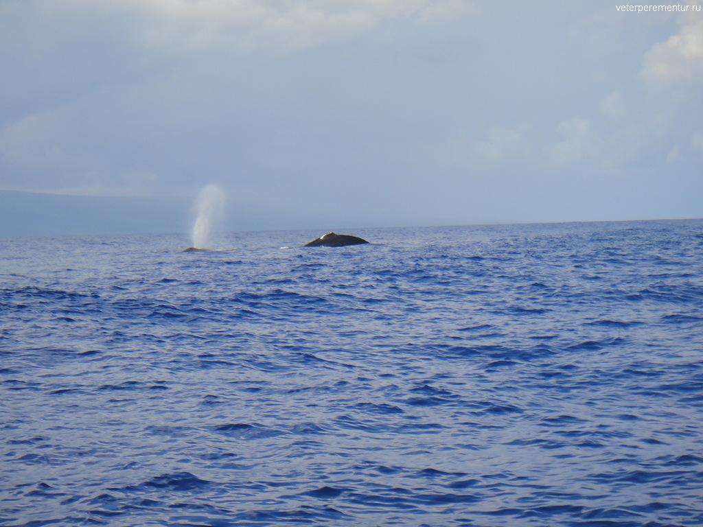 Кит рядом с Мауи