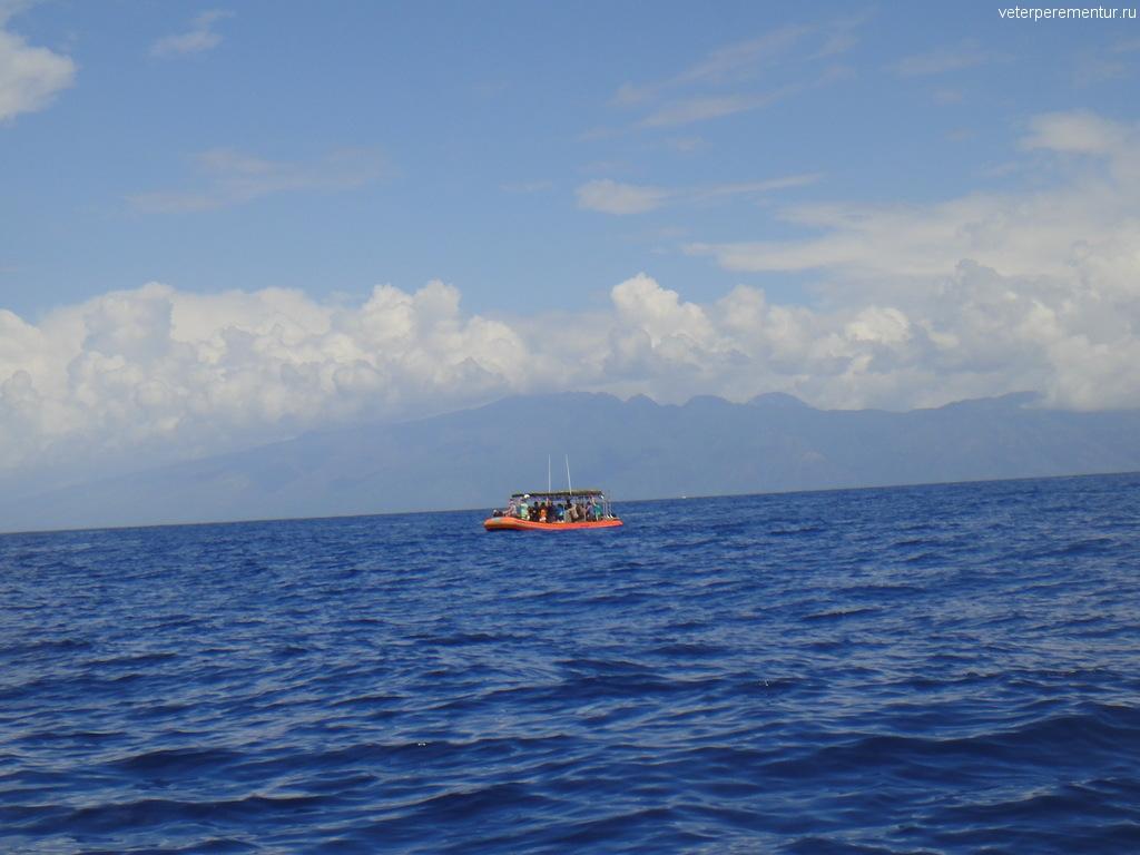 Наблюдение за китами, Мауи, Гавайи