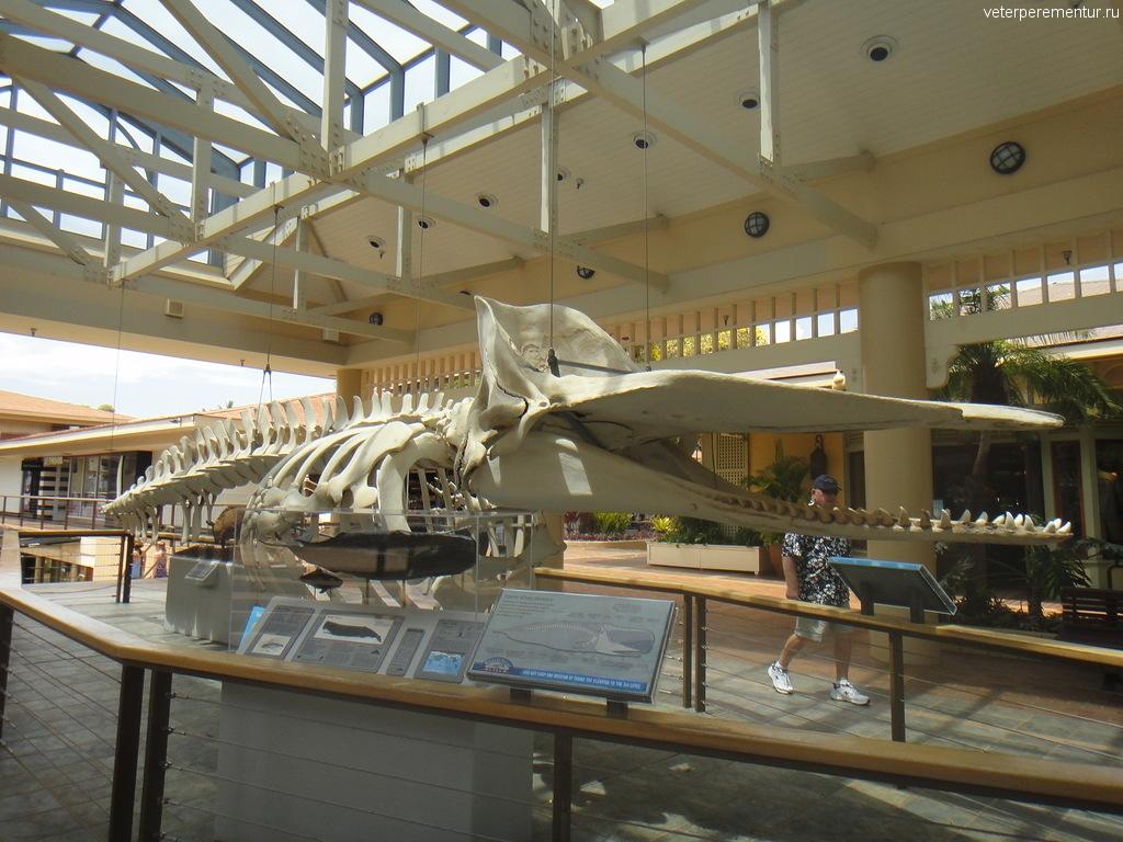 Скелет кашалота, музей на Мауи