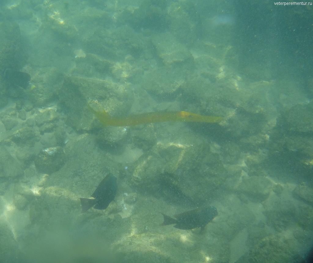 подводный мир Гавайев