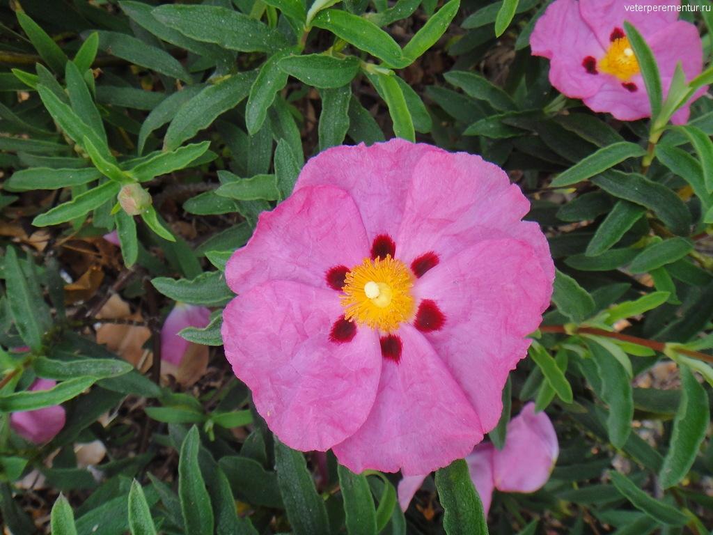 цветы, Лонг Бич, Лос Анджелес