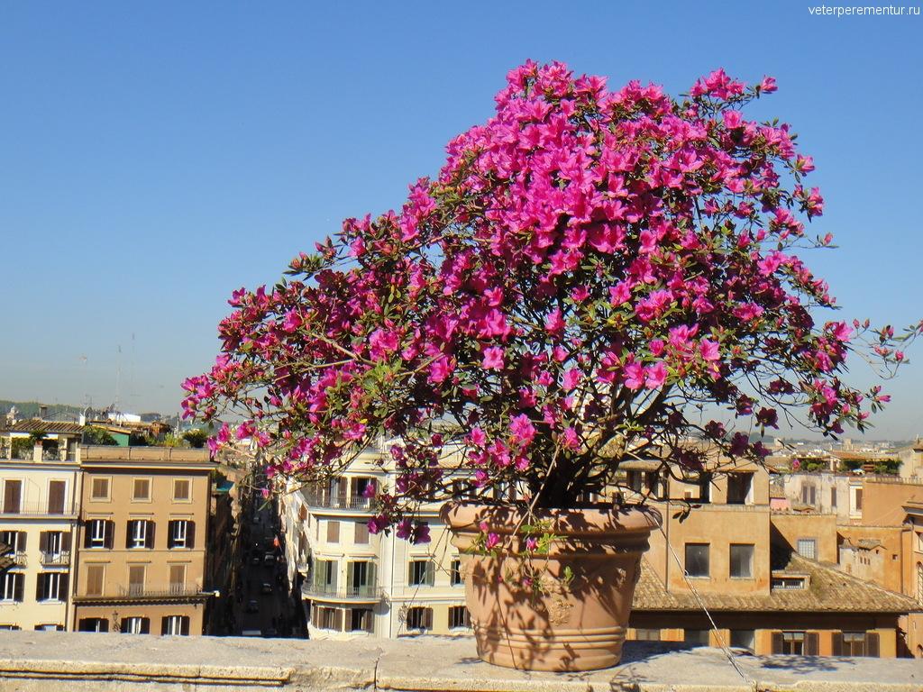 Цветы в Риме, Испанская лестница