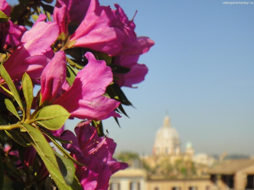 Цветы, весна в Риме
