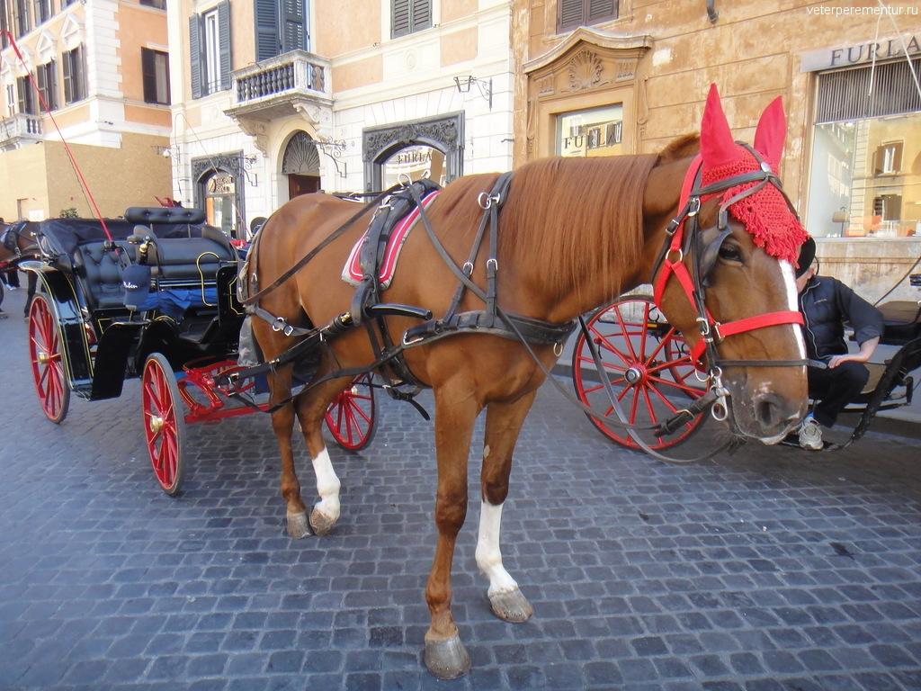Лошадь на улице Рима