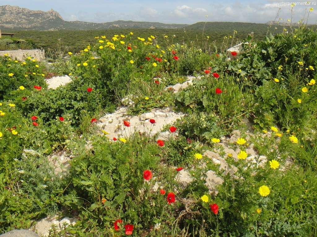 Цветы, весна на Корсике