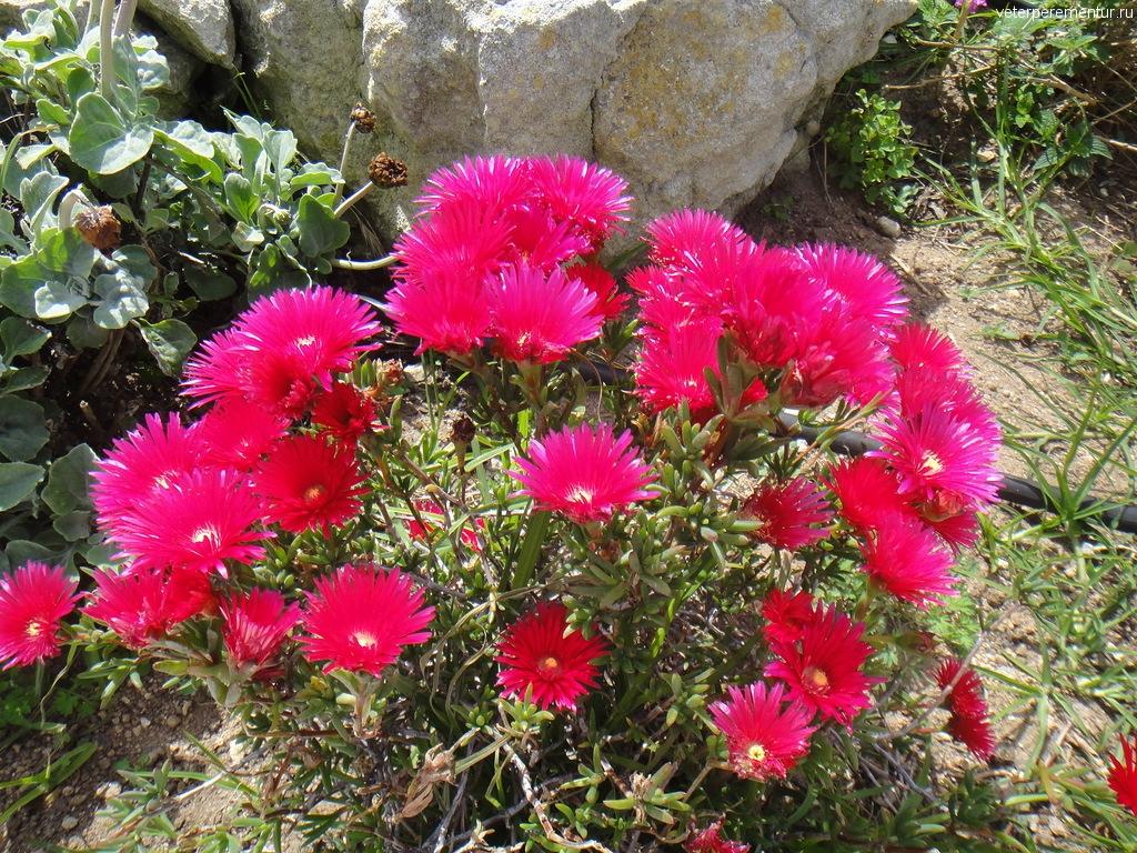Цветы, Бонифаччо, Корсика