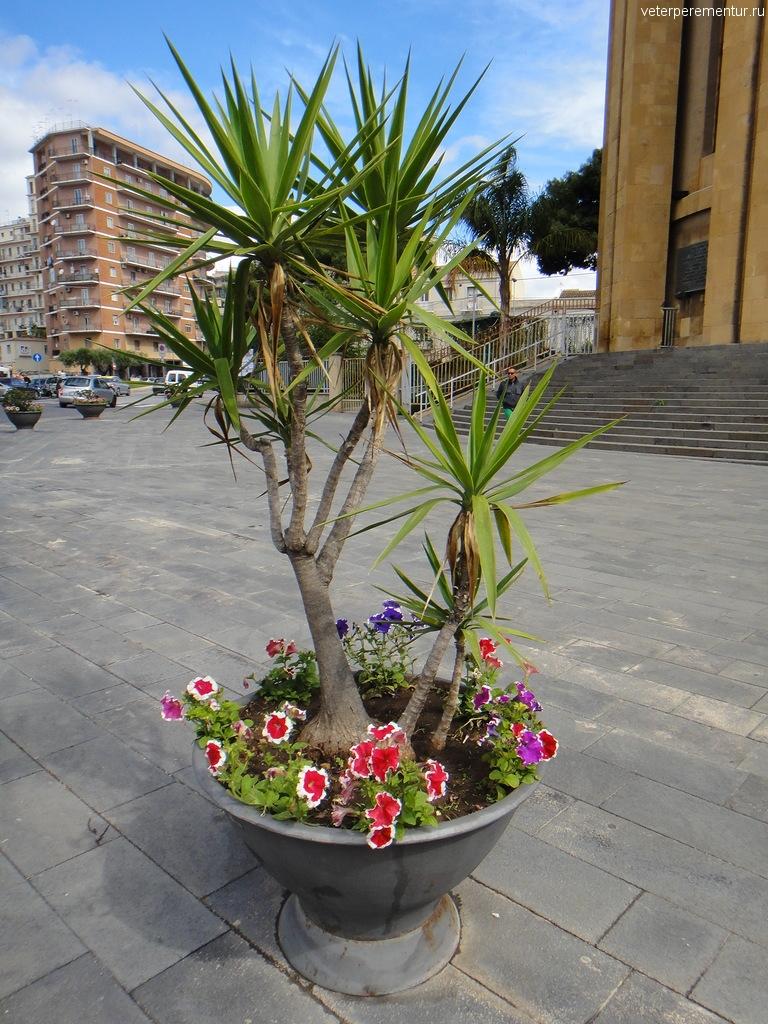 Сиракузы, цветы