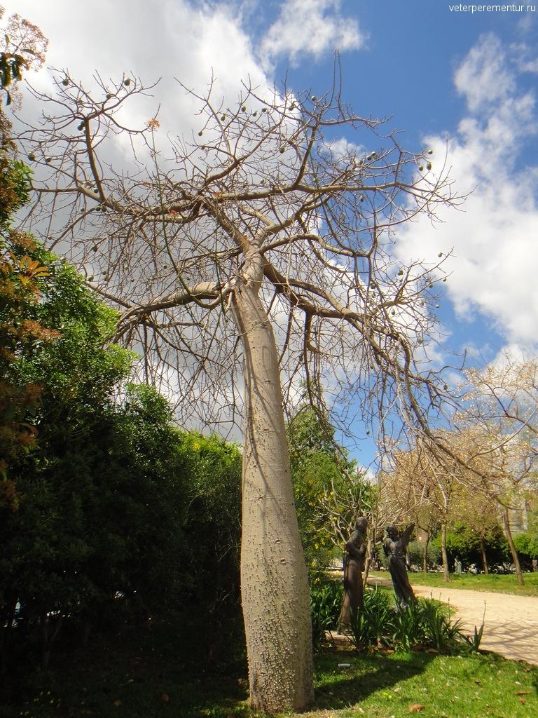 Дерево, Сиракузы