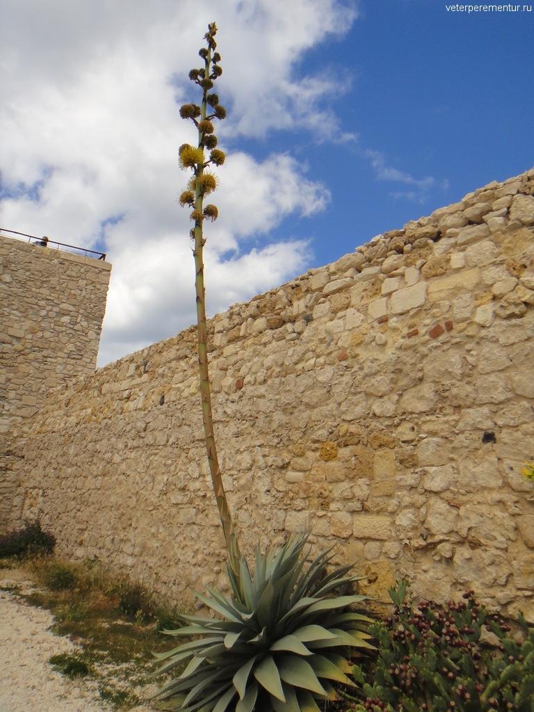 Крепость и кактусы в Сиракузах