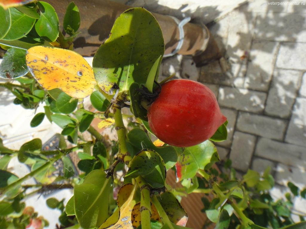 Растения в Сиракузах