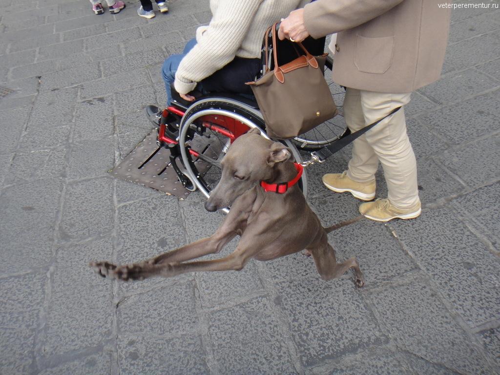 Собака в Таормине