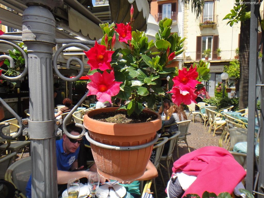 Цветы на улицах Сорренто