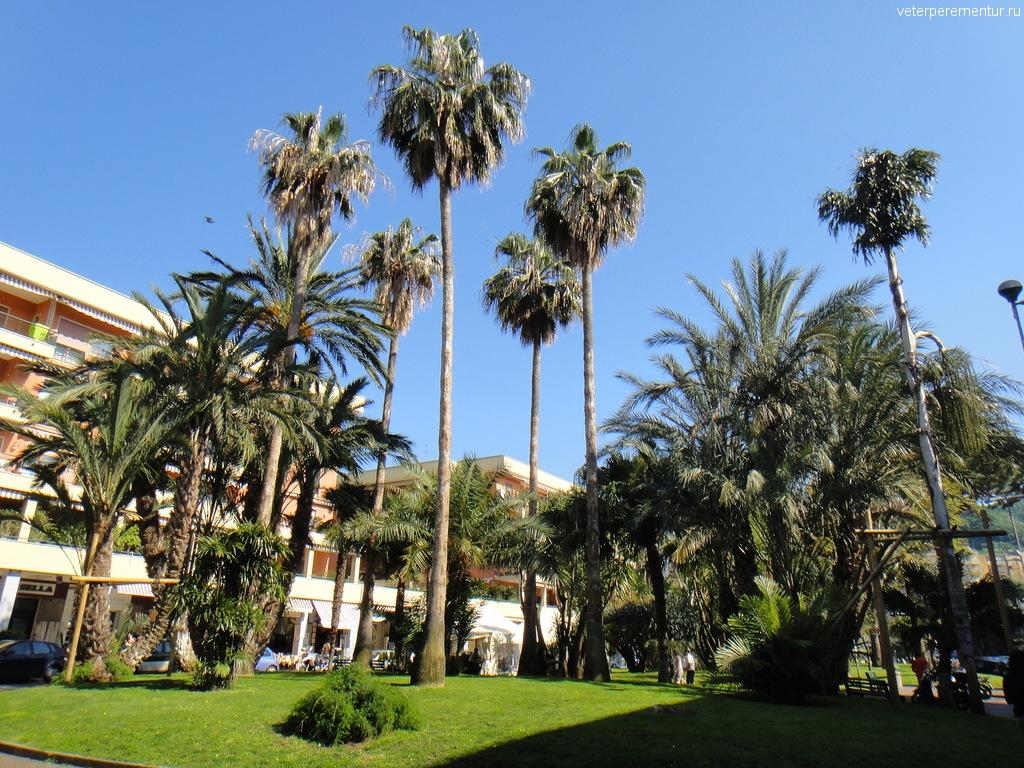 Пальмы в Сорренто