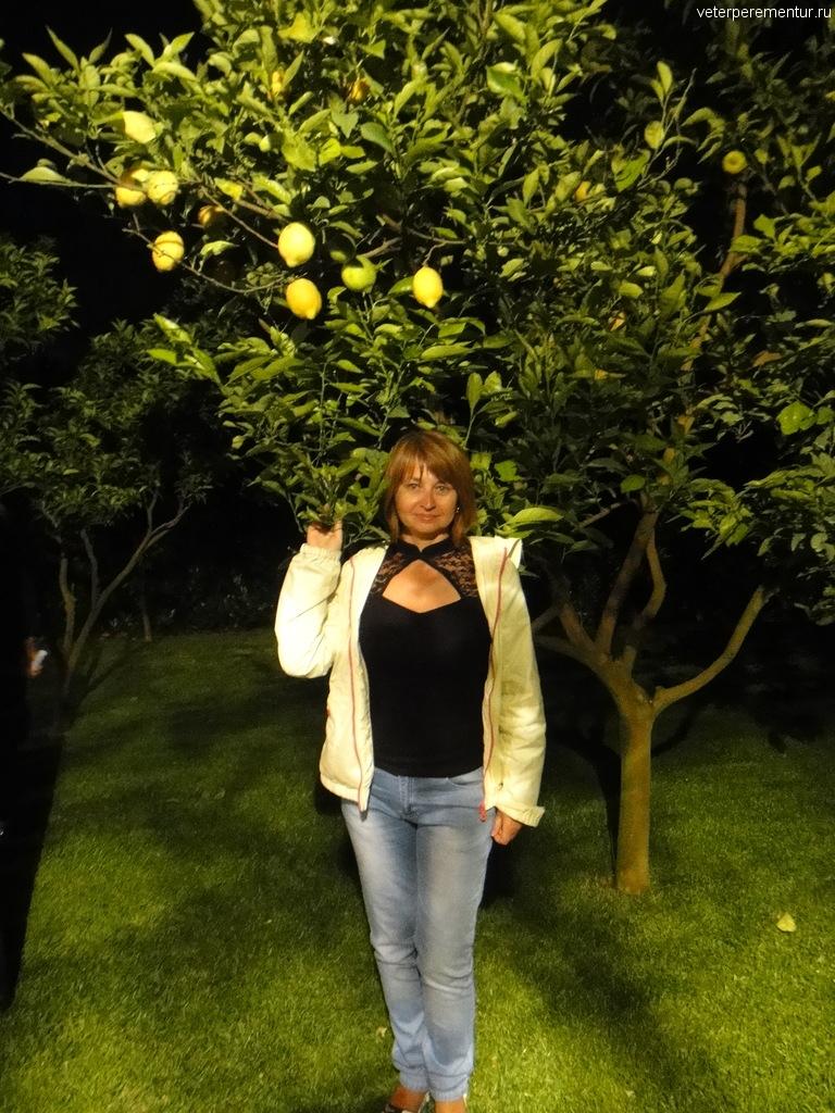 лимонное дерево, Сорренто