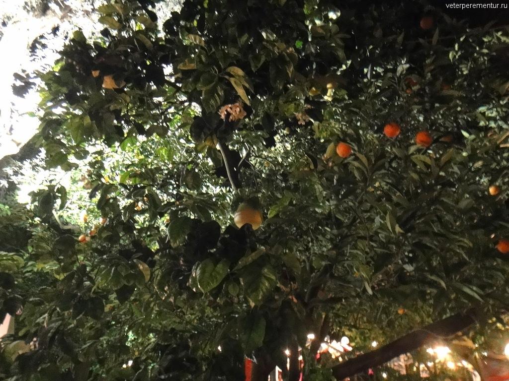 Фруктовый сад вечером в Сорренто