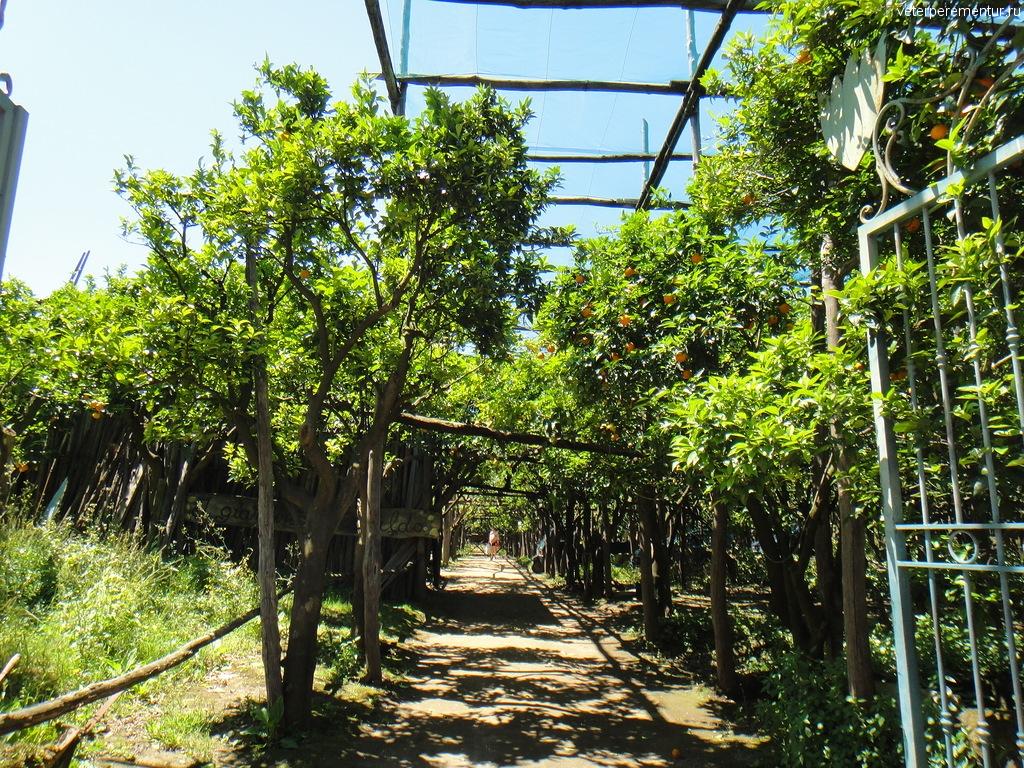 лимонный сад, Сорренто