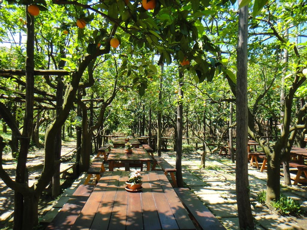 Столы в лимонном саду, Сорренто