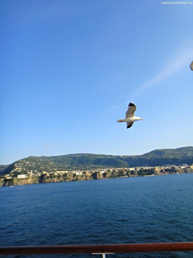 Azamara Quest покидает Амальфийское побережье, чайка