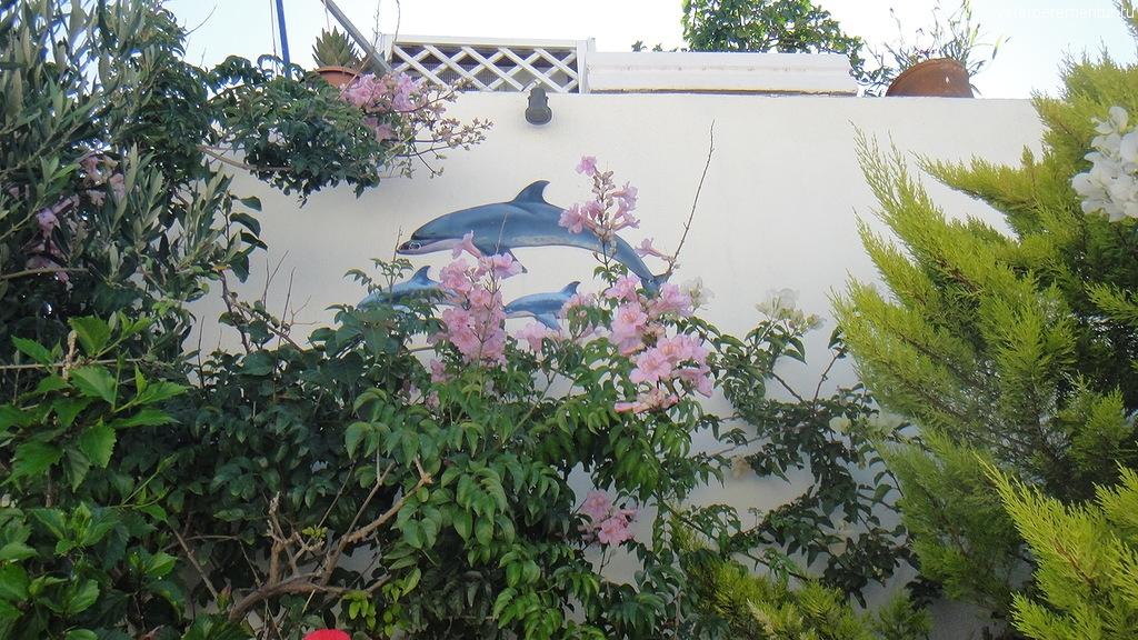 Цветы и дельфины на Санторини