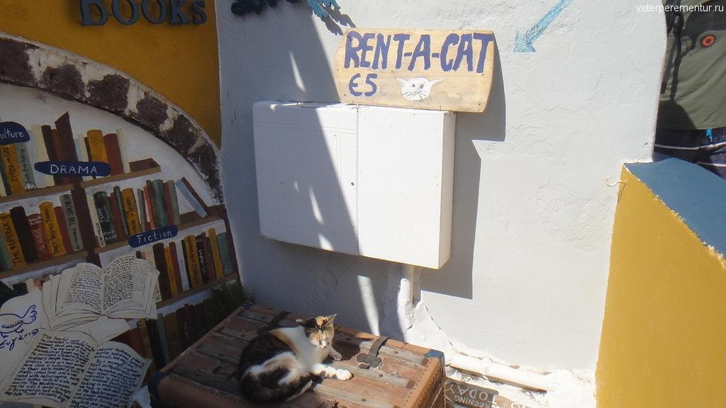 Кот в аренду, Санторини, Ийя
