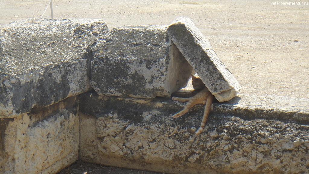 кошка на территории Храма Зевса, Афины