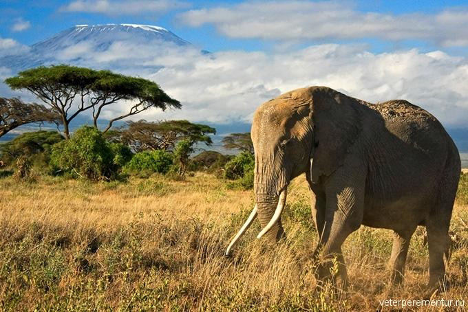 680-kenya-elephant