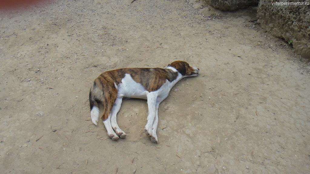 Собака в Олимпии, Греция
