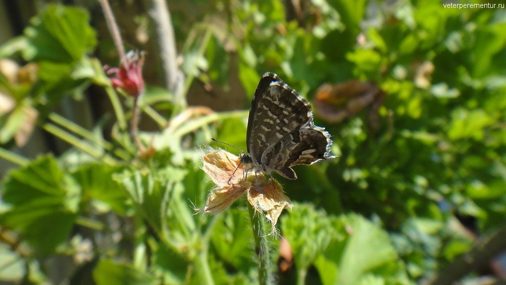 Бабочка в Керкире