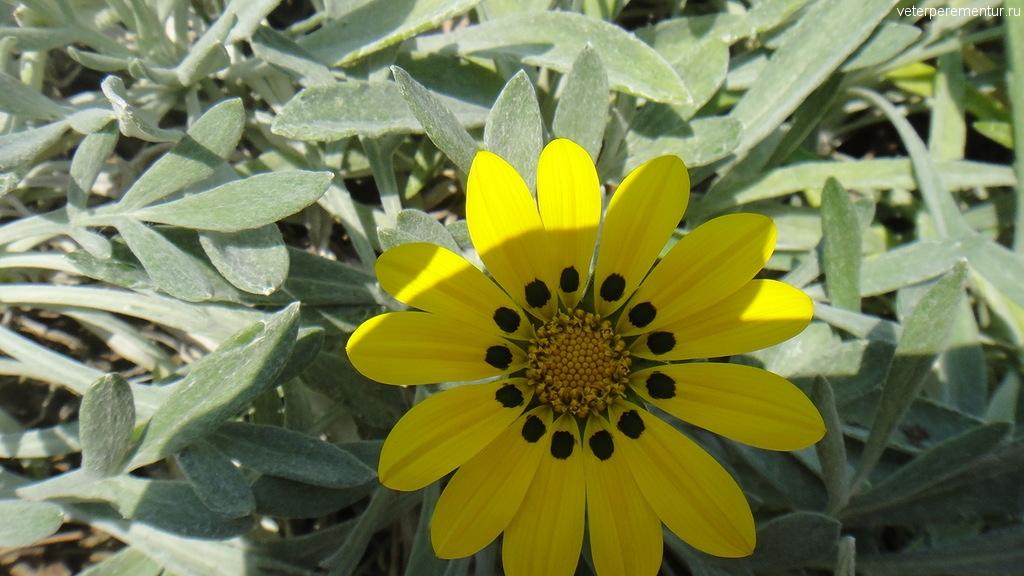 Цветы в Керкире, Корфу