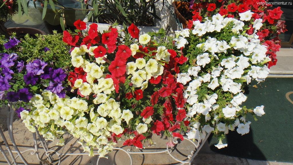 Цветы, Лидо, Венеция