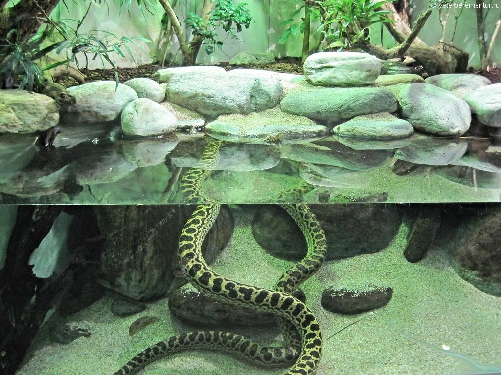 Змея в зоопарке Цюриха
