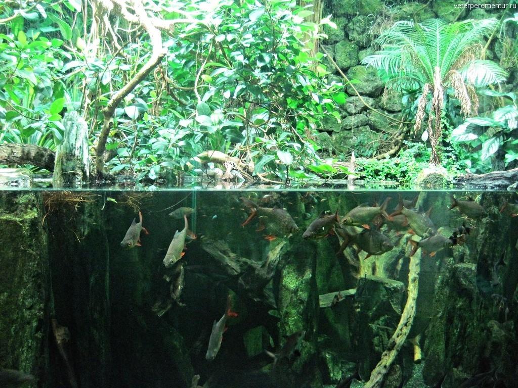 Рыбы в зоопарке Цюриха