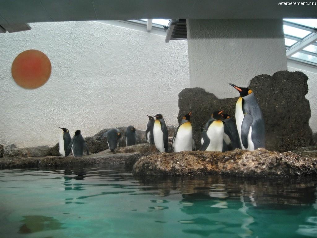 Пингвины в зоопарке Цюриха