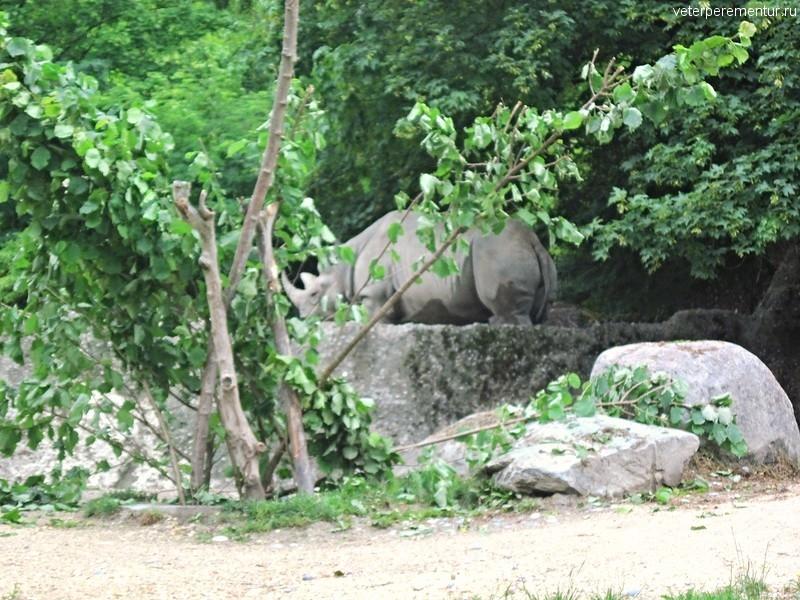 Носорог в зоопарке Цюриха