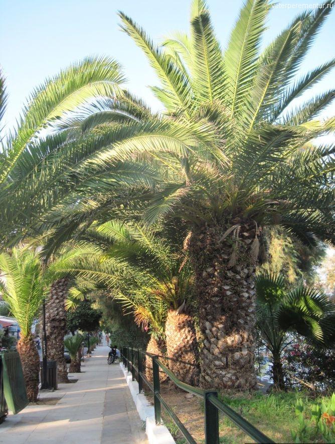 Пальмы, Ханья, Крит