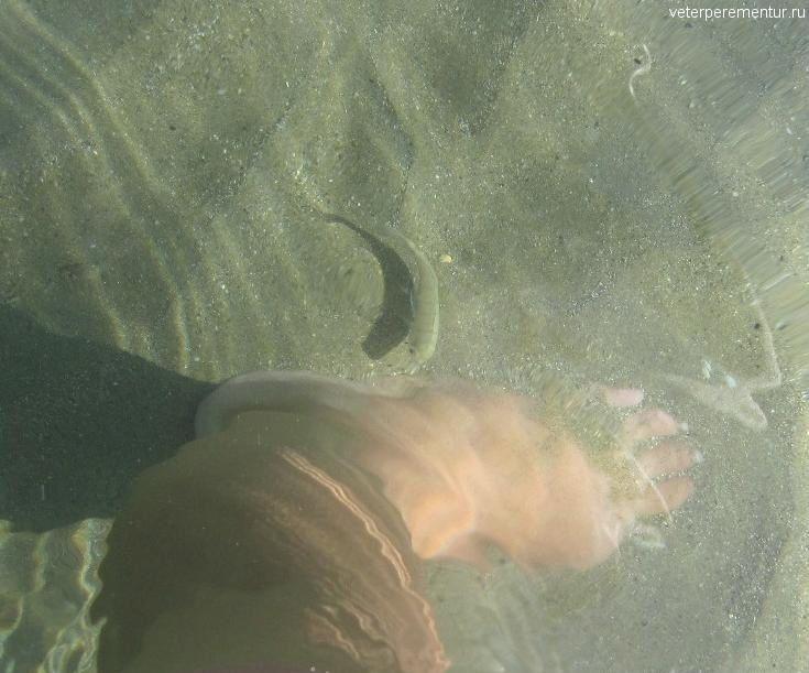 Рыбки у берега, Ханья, Крит