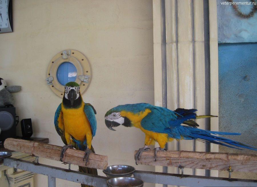 Sea Park, Кушадасы, попугаи