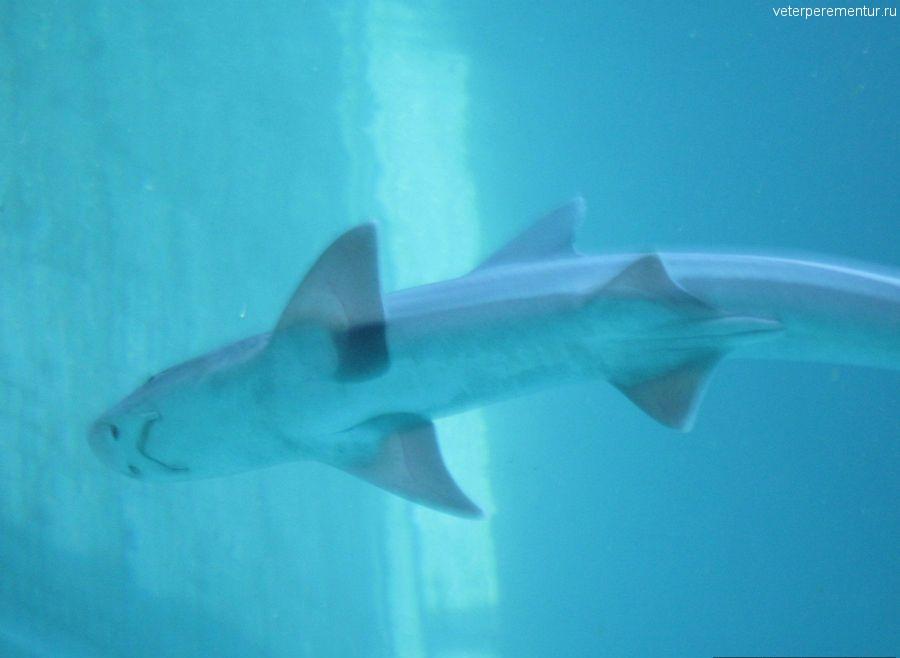 Sea Park, Кушадасы, акула